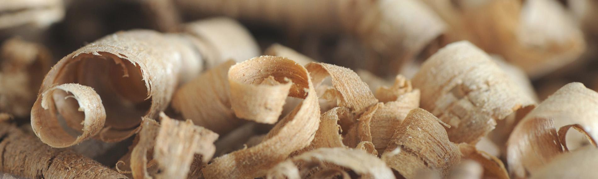 slide-biomassa